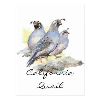 Cailles de Californie originales d'aquarelle. Carte Postale