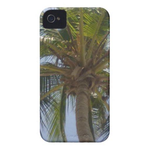 Caisse audacieuse de Blackberry de palmier Coques iPhone 4