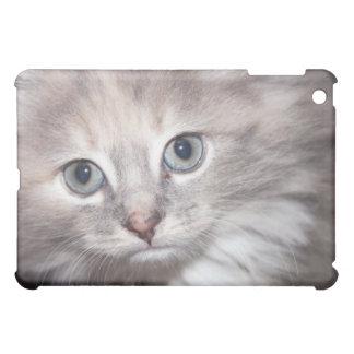 caisse d'iPod de chaton