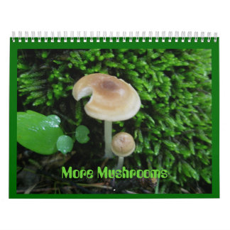 Calendrier - plus de champignons