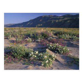 Califorinia, PS de désert d'Anza-Borrego, sable Carte Postale