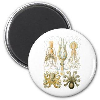 Calmar et poulpe magnet rond 8 cm