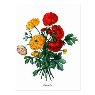 Camélia botanique Bokeh Carte Postale