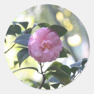 Camélia rose sticker rond