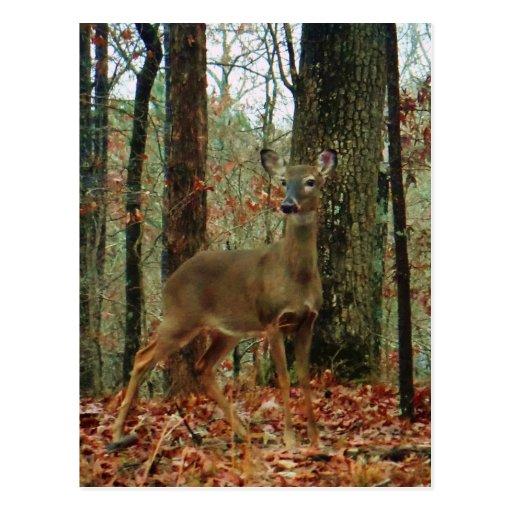 Camo, cerf commun de camouflage carte postale