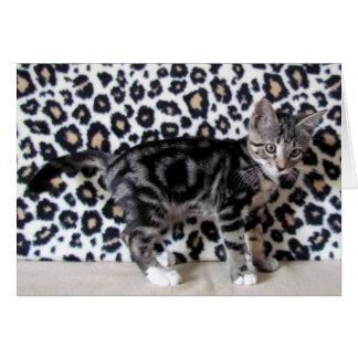 Camo Kitty tenant le premier rôle Lilo Carte De Vœux