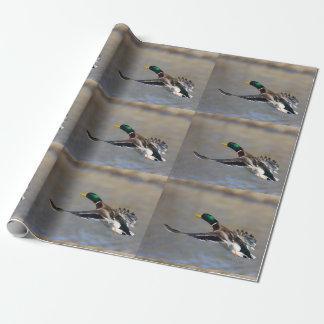 canard en vol papier cadeau