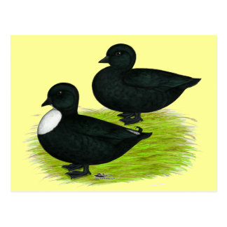 Canards :  Appels de noir Cartes Postales