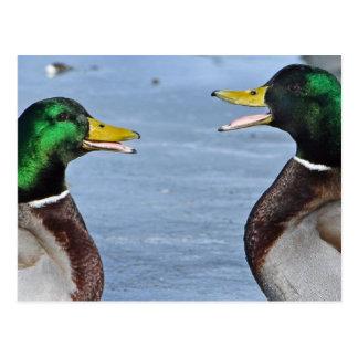 Canards drôles carte postale