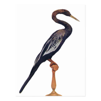 Canards, oiseau de serpent, oiseau du paradis cartes postales