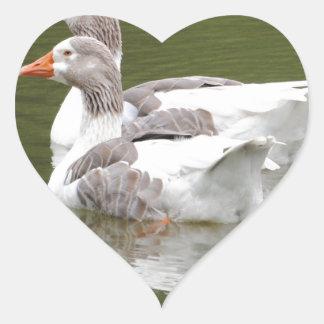 canards sticker cœur