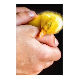 Caneton nouveau-né de sommeil dans des mains papeterie