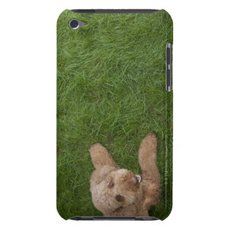 caniche standard 2 coques iPod touch