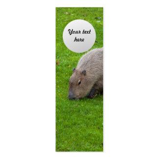 Capybara animal extraordinaire carte de visite