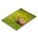 Capybara Carnet À Spirale