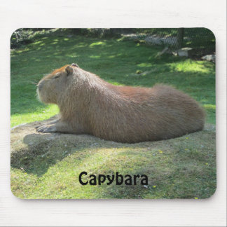 Capybara - rongeur géant tapis de souris