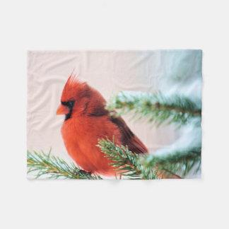 Cardinal dans l'arbre de sapin épousseté par neige