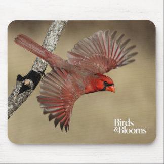 Cardinal du nord en vol tapis de souris