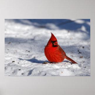Cardinal du nord masculin dans la neige posters