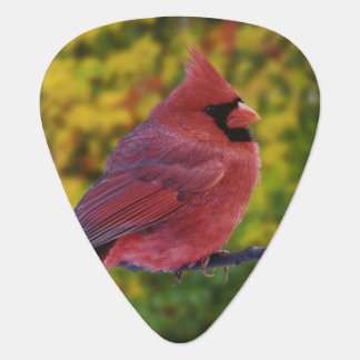 Cardinal du nord masculin en automne, Cardinalis Médiators