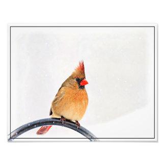 Cardinal féminin impression photographique