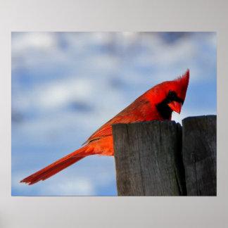 Cardinal rouge sur le tronçon en bois posters