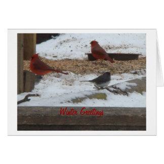 Cardinaux et Junco d'hiver Carte De Vœux