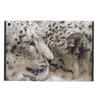 Caresse de léopard de neige