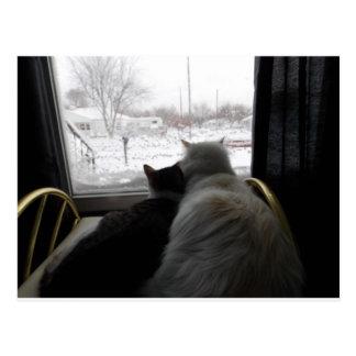 caressé sur la carte neigeuse de chat de jour