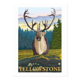 Caribou dans le sauvage - ressortissant de carte postale