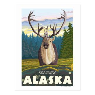 Caribou dans le sauvage - Skagway, Alaska Carte Postale