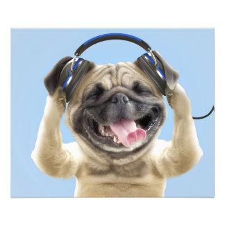Carlin avec des écouteurs, carlin, animal familier photos