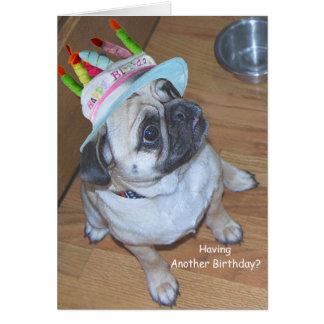 Carlin dans un casquette d'anniversaire cartes