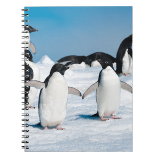 Carnet 2Miscellaneous - Penguins & Ice Two