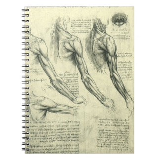 Carnet Anatomie de bras et d'épaule par Leonardo da Vinci