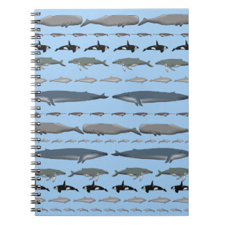 Carnet Baleines