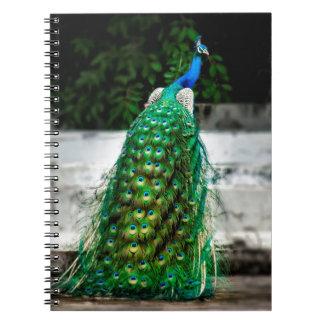 Carnet belles couleurs d'art de plume de paon