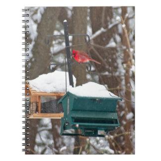 Carnet Cardinal sur Birdfeeder