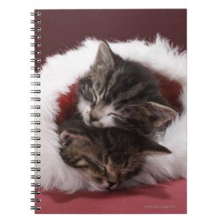 Carnet Chatons endormis ensemble dans le casquette de