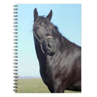 Carnet Cheval noir et le ciel bleu