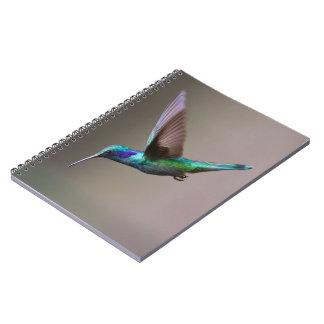 Carnet Colibri en vol