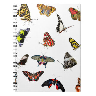 Carnet Collage de collection de papillon