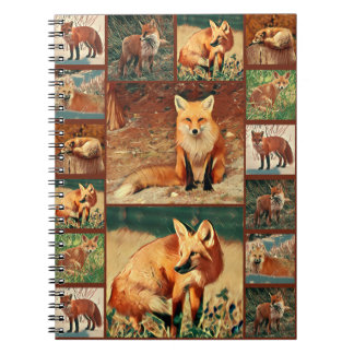 Carnet Collection de Fox rouge
