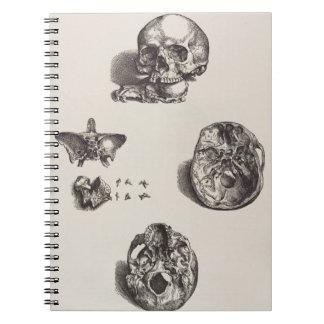 Carnet Crâne - Icones Anatomicae