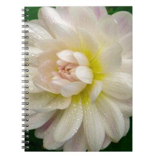 Carnet Dahlia blanc