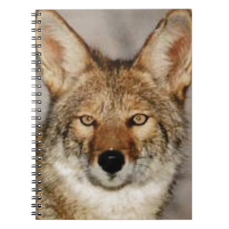 Carnet de coyote fin