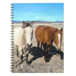 Carnet de deux chevaux