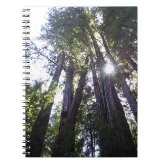 Carnet de notes à spirale de séquoias de Henry