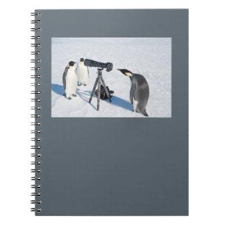 Carnet de paparazzi de pingouin