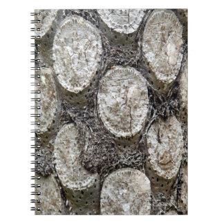 Carnet de photo d'arbre de fougère argentée